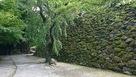 苔覆う石垣