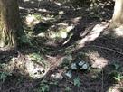 井戸跡と石積み…