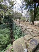 亀岡のマキ並木奥の石垣…