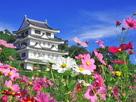 秋桜と旭城 '19…