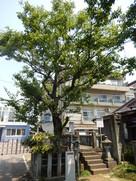 柴田勝家とお市の墓所