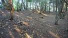 須川山砦の土塁…