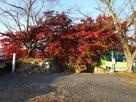 裏中門と紅葉