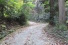 林道天王線の支線入口…
