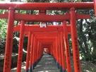 本丸下にある名島豊川稲荷神社の千本鳥居…