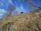 南側から石積を見上げる…