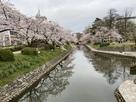 松川の桜風景(松川公園にて)