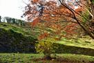 御主殿下の石垣と紅葉…