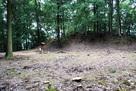 郡山城跡三の丸石垣跡…