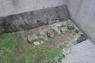 発掘された北の庄城の石垣