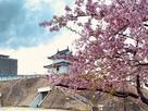 桜と清明櫓
