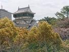 八坂神社から。左は市庁舎…