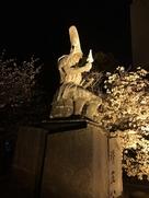 夜桜と清正公