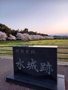 夕暮れの桜と菜の花と水城…