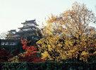 改修前の姫路城と紅葉…