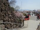 館跡から見た武田通りの桜並木
