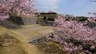 桜と玉石垣