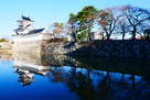 模擬天守と水堀の桜3月24日…