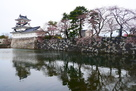 模擬天守と水堀の桜3月25日…
