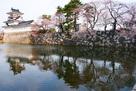 模擬天守と水堀の桜3月26日…