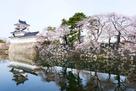 模擬天守と水堀の桜3月27日…