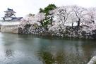 模擬天守と水堀の桜3月28日…