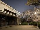 夜桜と多聞櫓