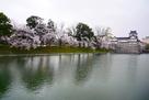 水堀越しの桜と模擬天守…