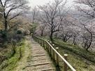 見晴らし台への登山道と桜