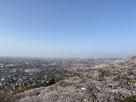 見晴らし台からの眺望と桜景色