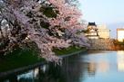 夕日に照らされる桜と模擬天守…