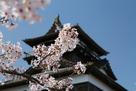 桜の背景に天守