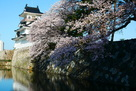 桜と模擬天守