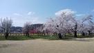 花もも公園から眺める舘の山…