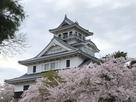 豊公園の桜と天守…