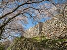桜と二の丸の石垣…