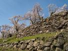 山上の丸本丸石垣と桜…