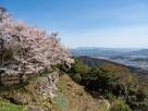山上の丸二の丸の桜…