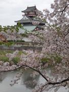 桜と天守其の壱…