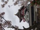 桜と天守其の弐…