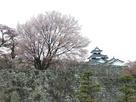桜吹雪と三階櫓…