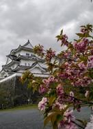 残桜と天守閣