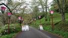 桜祭りやってました。…
