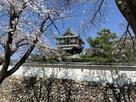 満開の桜と天守…