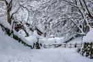 百彩寺 雪景色