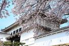 菱の門と桜