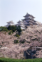 姫路城天守群と桜…