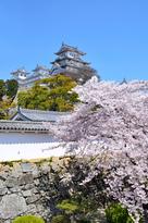 天守と桜(改修前)…