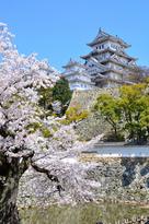 桜越しの三国堀と天守(改修前)…