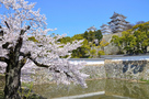 桜と三国堀と大天守(改修前)…